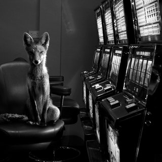 Jason McGroarty, Totem Fox