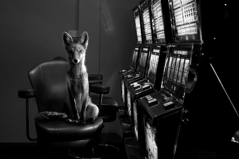 main work - Jason McGroarty, Totem Fox