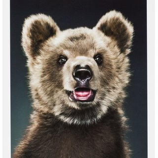 Jill Greenberg, Untitled A26-11 (Ursine)