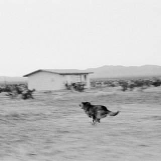 Dogs Chasing my Car in the Desert, D25F02 art for sale