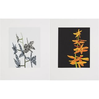 Untitled (Diptych) art for sale