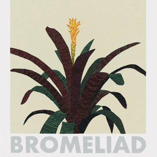 Bromeliad art for sale