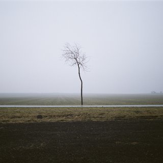 Baum (Nebel) art for sale