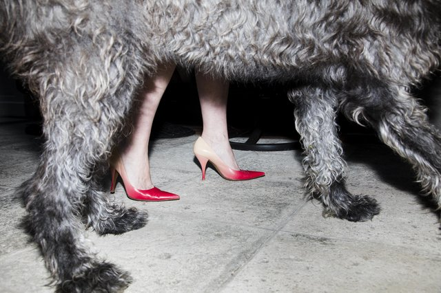 Landon Nordeman - Dog with Heels, High Season series, Palm Beach, Photograph