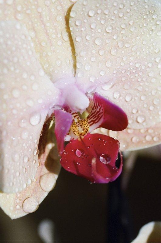 Lina Scheynius - Untitled-Flower-1 for Sale   Artspace