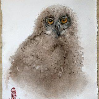 Young eagle owl art for sale