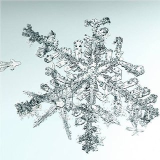 Untitled (Snowflake) art for sale