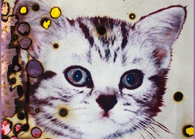 Miyoshi Barosh - I Love Kitties (bruised)