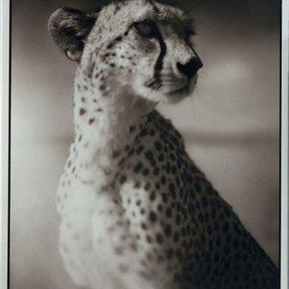 Portrait of Cheetah Against Dark Sky - Maasai Mara (from On This Earth Portfolio) art for sale