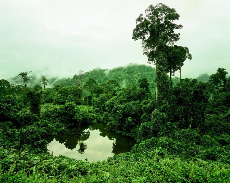 main work - Olaf Otto Becker, PRIMARY FOREST 02, LAKE, MALAYSIA 10/2012, ALTITUDE 240 M
