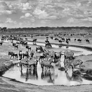 The Great Migration art for sale