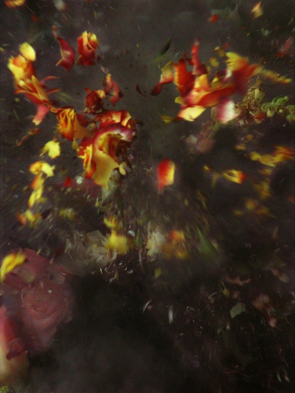 main work - Ori Gersht, Time After Time - Untitled No. 29