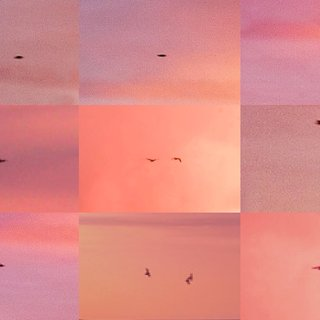 Suns from Sunsets from Flikr - Out-takes/Birds (Pink) art for sale
