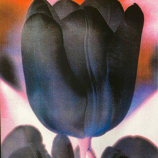 Dark Tulip art for sale