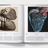different view - Phaidon, Anatomy: Exploring the Human Body - 3