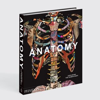 Anatomy: Exploring the Human Body art for sale