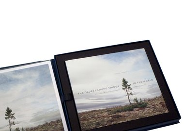 Rachel Sussman - The Oldest Living Things in the World Limited collectors edition with book box, first edition book, and print of Spruce Gran Picea #0909-11A07 (9,550 years old; Dalarna, Sweden)