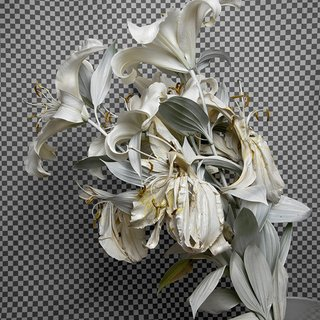 Stephanie Syjuco, Whiteout (Krylon ColorMaster Gloss White on White Oriental Lilies)