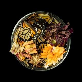 Vanitas (in a Petri dish) 26 art for sale