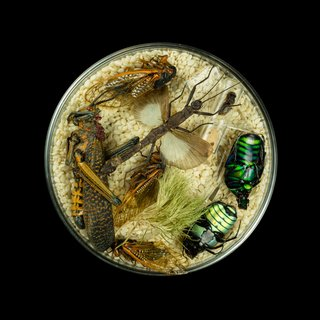 Vanitas (in a Petri dish) 29 art for sale