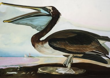 Thomas Frontini - Brown Pelican