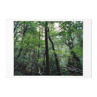 Yakushima (from Paradies) art for sale