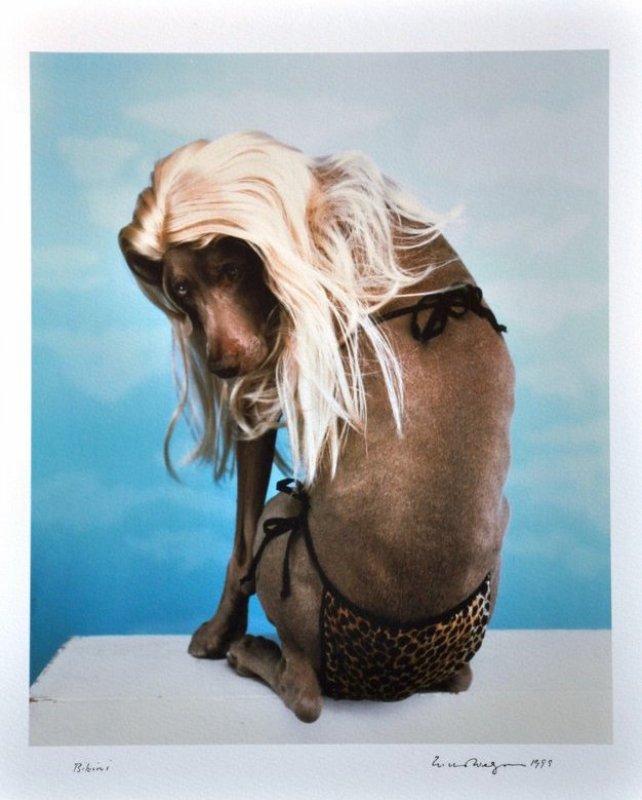 William Wegman : Fashion Photographs: Ingrid Sisch, William 25