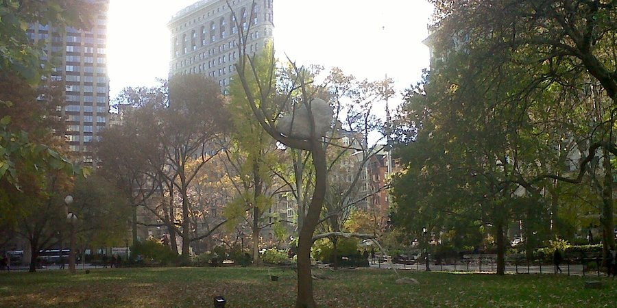 Giuseppe Penone sculpture in Madison Square Park