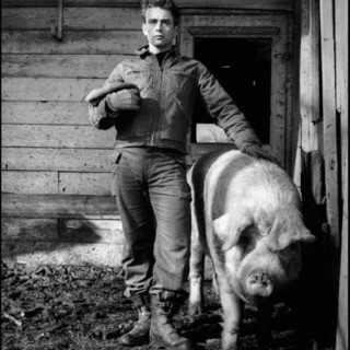 "USA. Fairmount, Indiana. 1955. James Dean on the farm of his uncle Marcus Winslow, posing with a pig asking himself ""do I belong to the animals, to the pigs, the cattle, or the goats?"" art for sale"