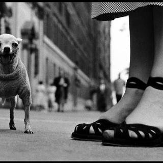 Elliott Erwitt, USA New York City