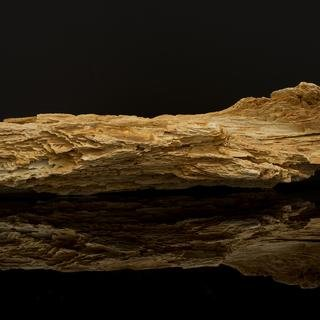 Frank Benson, Petrified Wood