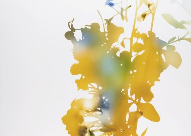 "work by James Welling - 001, 2006 from ""Flowers"""