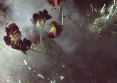 Ori Gersht - Time After Time, Untitled 27