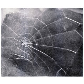Spider Web art for sale