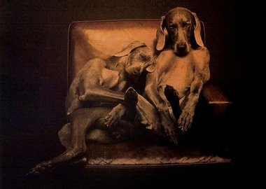 work by William Wegman - Best Buddies