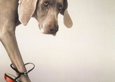 work by William Wegman - Walk-a-thon