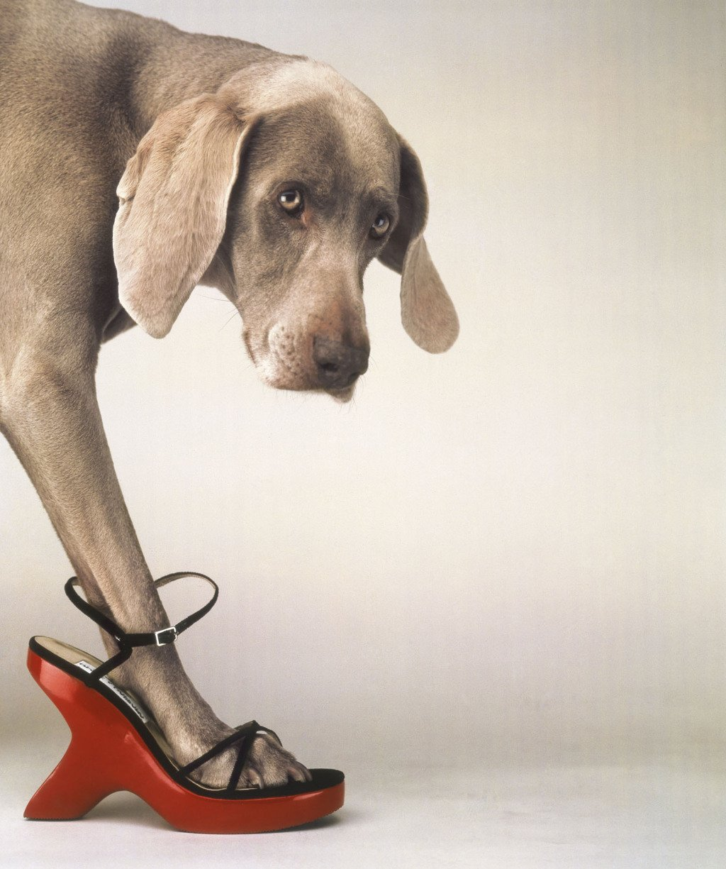 William Wegman : Fashion Photographs: Ingrid Sisch, William 66
